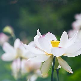 Softly by Nancy Carol Photography