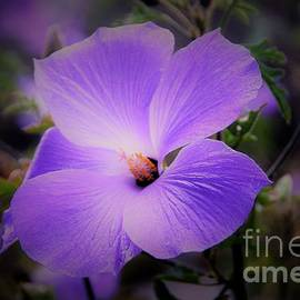 Softly Purple Floral by Suzanne Wilkinson