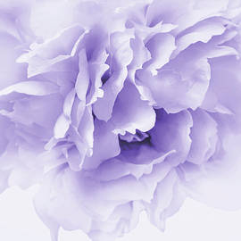 Softness of a Lavender Peony Flower by Jennie Marie Schell