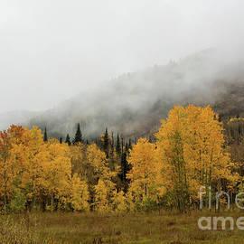 Soggy Autumn Day by John Bartelt