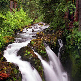 Sol Duc Falls by Douglas Taylor