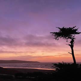 Solo Cypress  by Sierra Vance