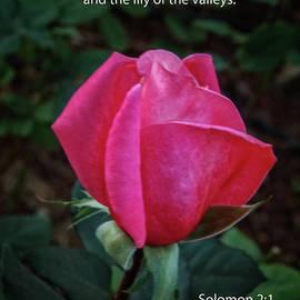 Solomon 2 Verse 1 by Robert Bales