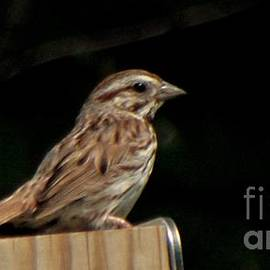 Song Sparrow           August           Indiana by Rory Cubel
