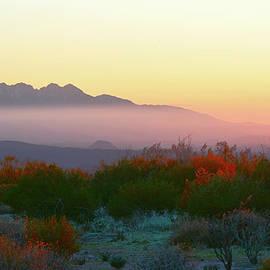 Sonoran Morning Light by Barbara Sophia Travels