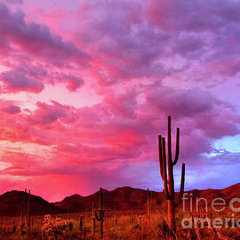 Sonoran Summer Sunset by Douglas Taylor