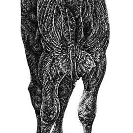 South Devon calf - baby cow ink illustration by Loren Dowding