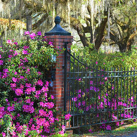 Southern Springtime by Jerry Griffin