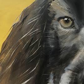 Spaniel Dog by Heidi Voegeli