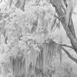 Spanish Moss in the Bayou by Jill Love Photo Art