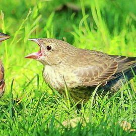 Sparrow and Cowbird by Atiqur Rahman