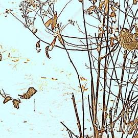 Sparrow  by Nancy Kane Chapman