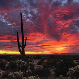 Spectacular Sonoran Skies  by Saija Lehtonen