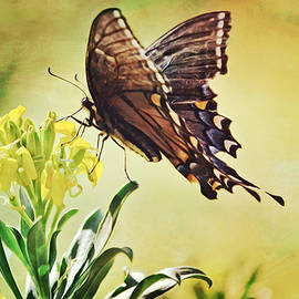 Spicebush Swallowtail Butterfly by Gaby Ethington