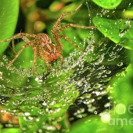Spider on dew-covered web by Igor Aleynikov