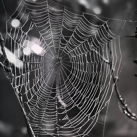 Spider Web in Black and White by Marilyn DeBlock