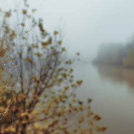 Spider web on a mist river at autumn  by Sergio Florez Alonso