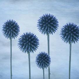 Spiky balls by Larisa Fedotova
