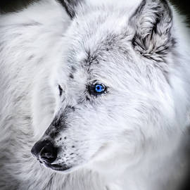 Spirit Of The Wolf by Karen Wiles