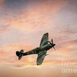 Spitfire Mark XIVe by Viv Thompson