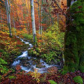 Splendid woodland by Cosmin Stan