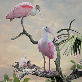 Spoonbills of Florida by Spadecaller
