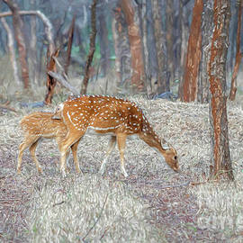 Spotted deer in the forest by Pravine Chester