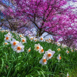Spring At Highland Park by Mark Papke