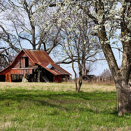 Spring at the Farm in Tyler TX by Betty Denise