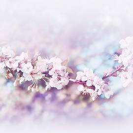 Spring Blossom by Slawek Aniol