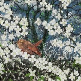 Spring Blossom Wren by Philip Harvey
