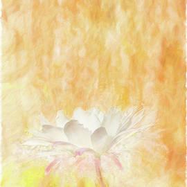 Spring Cactus Flower by Terry Davis
