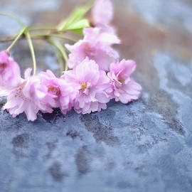 Spring Cherry Blossoms by Susan Maxwell Schmidt