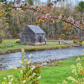 Spring Comes To Rye by Tricia Marchlik