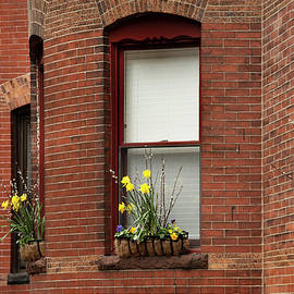 Spring Daffodils in Brownstone Window Boxes - Boston by Joann Vitali