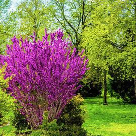 Spring Day Painterly by Jennifer White