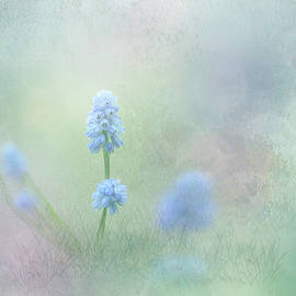 Spring Ephemeral with Texture - Muscari by Patti Deters