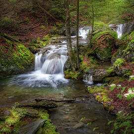 Spring Forest Waterfall by Bill Wakeley