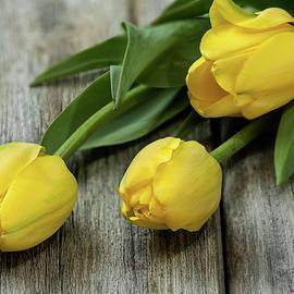 Spring Grace by John Rogers