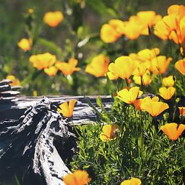 Spring Has Sprung In The Sonoran by Saija Lehtonen