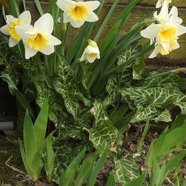 Spring Has Sprung With Surprises by Barbara Ebeling