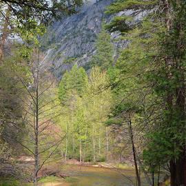 Spring in Yosemite National Park by Debby Pueschel