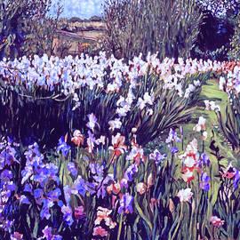 Spring Irises by David Lloyd Glover