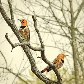 Spring Mates by Carmen Macuga