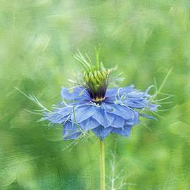 Spring Nigella by Terry Davis