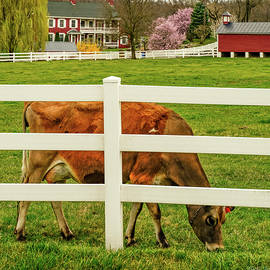 Spring on the Farm by Kathi Isserman
