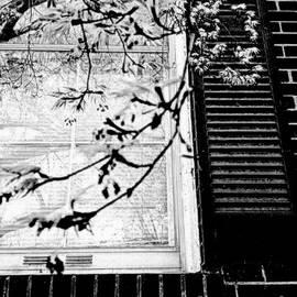 Spring Reflections by Nancy Kane Chapman