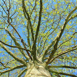 Spring Rejoice by Atiqur Rahman