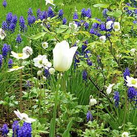 Spring, Spring, Spring by Lyuba Filatova
