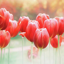 Spring Tulips in Vibrant Red  by Carol Japp